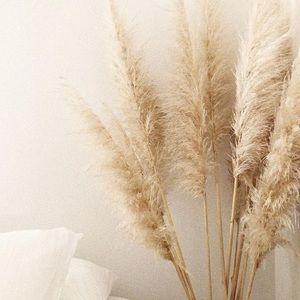 Pampas Grass Stem Bundle